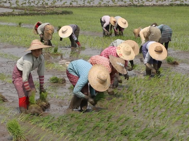 agriculteurs-chine